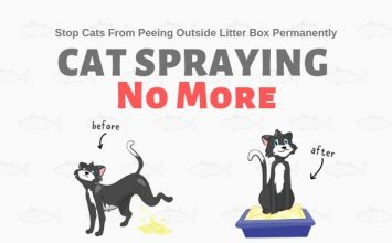 Cat Spraying No More book by Sarah Richards