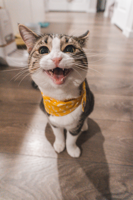 Cat Spraying No More Scam